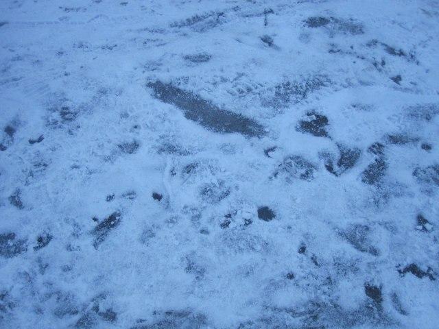 Samma dag 2011 tycks det ha varit snö och is.