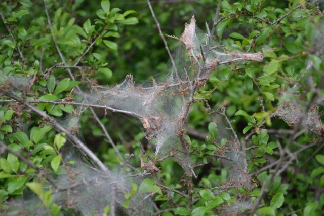Undrar om det sitter en spindel någonstans och river sig i huvudet och undrar hur sjutton det kunde bli sådan här oreda med nätet?
