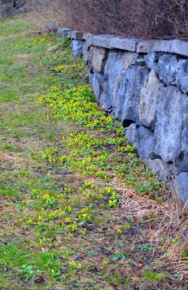 """Denna komposition kallar jag """"Vintergäckar med stenmur""""."""