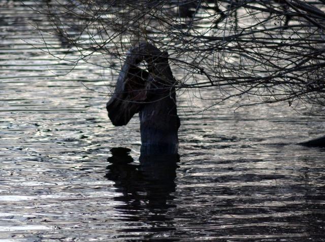 Men ser man samma stubbe i annan vinkel blir det ingen gubbe, utan kanske ett drakhuvud som sticker upp ur vattnet!