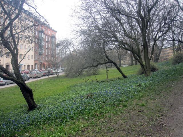 I flororna kallas den 'blåstjärna' eller 'rysk blåstjärna', men jag tror de flesta kallar den just 'scilla'.