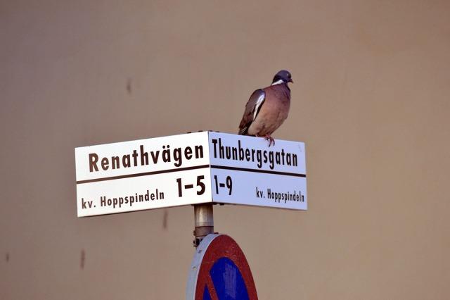 Det här kvarteret heter 'Hoppspindeln', det låter lustigt, eller hur?