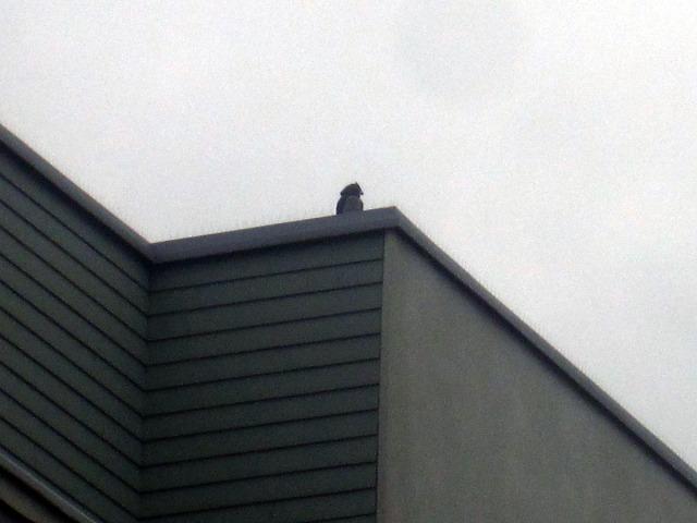 Den där märkliga profilen på ett tak vid Liljeholmstorget i Stockholm fångade min uppmärksamhet. Såg ut som en fågel, en stor fågel ... men vilken sort?