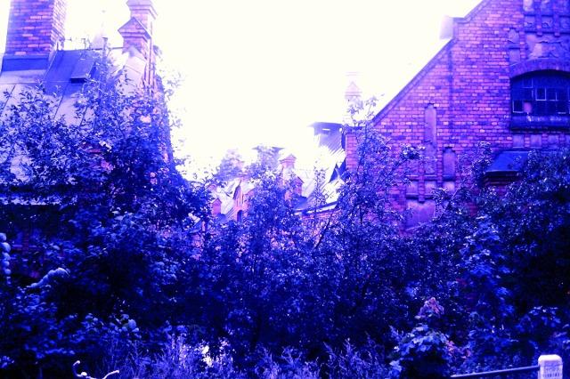 """""""Sagoslott"""" har jag skrivit tidigare om det gamla stallet. Och ett sagoslott måste naturligtvis (?) vara inbäddat i växtlighet som delvis skyddar för insyn och ger stället en mystisk atmosfär."""