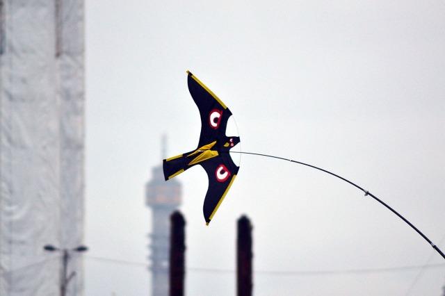 ... men vad det här är för art har jag ingen aning om. Någon sorts rovfågel ser det ut som ...