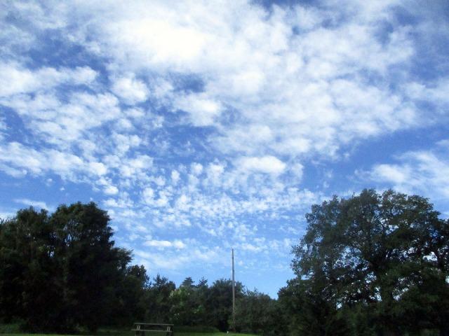 moln djurgården bergianska